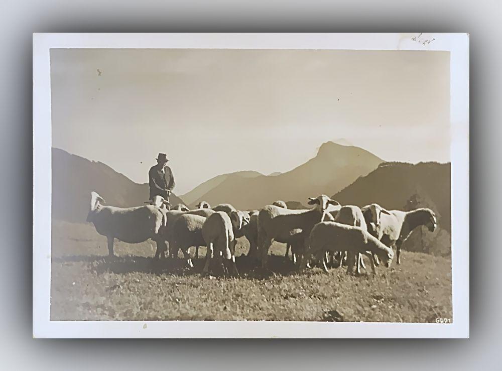 Schäfer mit Schafen auf Weide in den Bergen