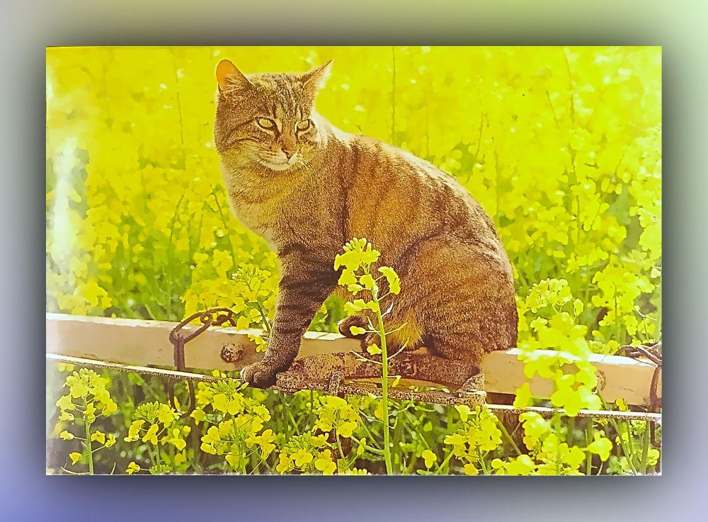 Katze auf Balken zwischen Pflanzen - Postkarte